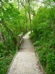 Bridge in Forest Stock I