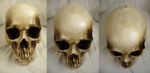 Human Skull Stock I