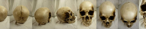 Skull Study Complete by Melyssah6-Stock