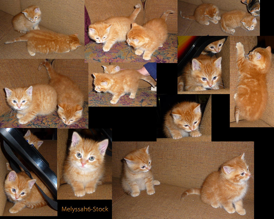 Kitten Stock Collage I by Melyssah6-Stock