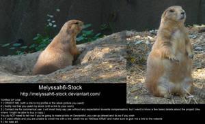Prairie Dog Stock
