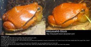 Orange Frog Stock