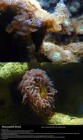 Sea Anemone Stock 3