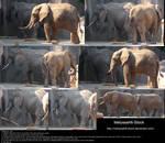 Elephant Stock 3
