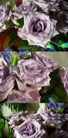 Lavender Rose Waterdroplets Stock 3