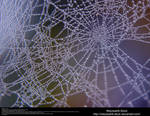 Spiderweb Dewdrops Stock Texture 1