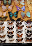 Butterfly Stock 3