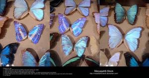 Butterfly Stock 6