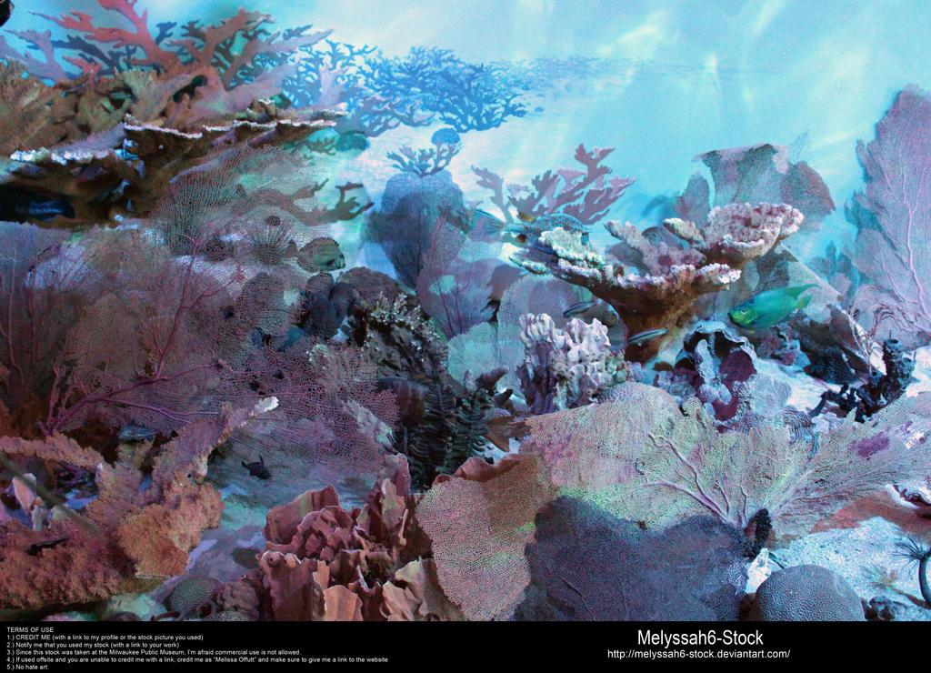 Ocean Floor Stock 2 by Melyssah6-Stock