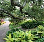 Natchitoches Garden Stock 19