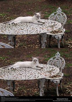 White Iron Seating Arrangement Stock 5 - Cat