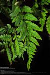 Backlit Leaves Stock 2
