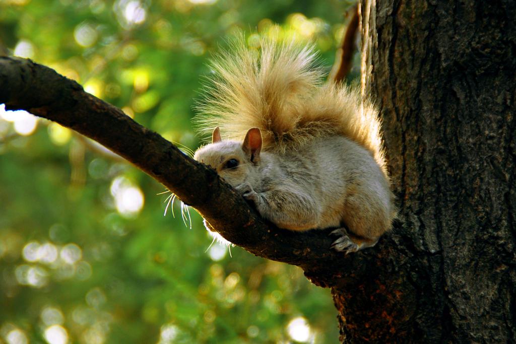 White squirrel. by Non-Non-Papillon