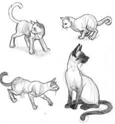 a study of cats. by akuma-neko