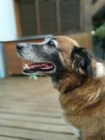 my dog by ikafox