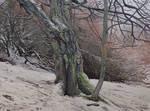 Wild Trees II - Bystrzyckie Mountains II