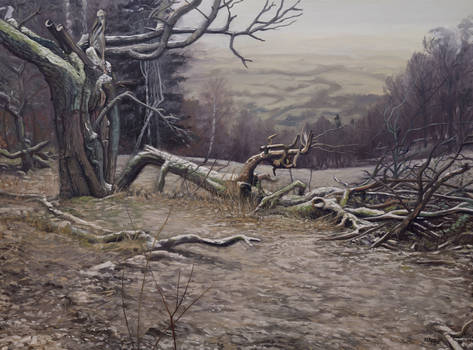 Wild Trees I - Bystrzyckie Mountains I