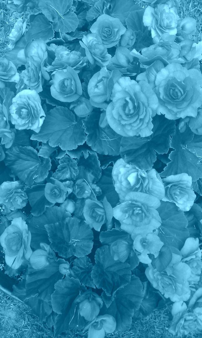 Flower 2 by sierra9