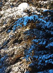 Blue sunrise shadow by arilla