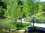 Enchanted Bridge of Nature