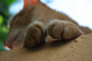paws by ZeNey