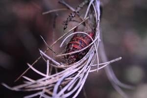 abandoned nest by ZeNey