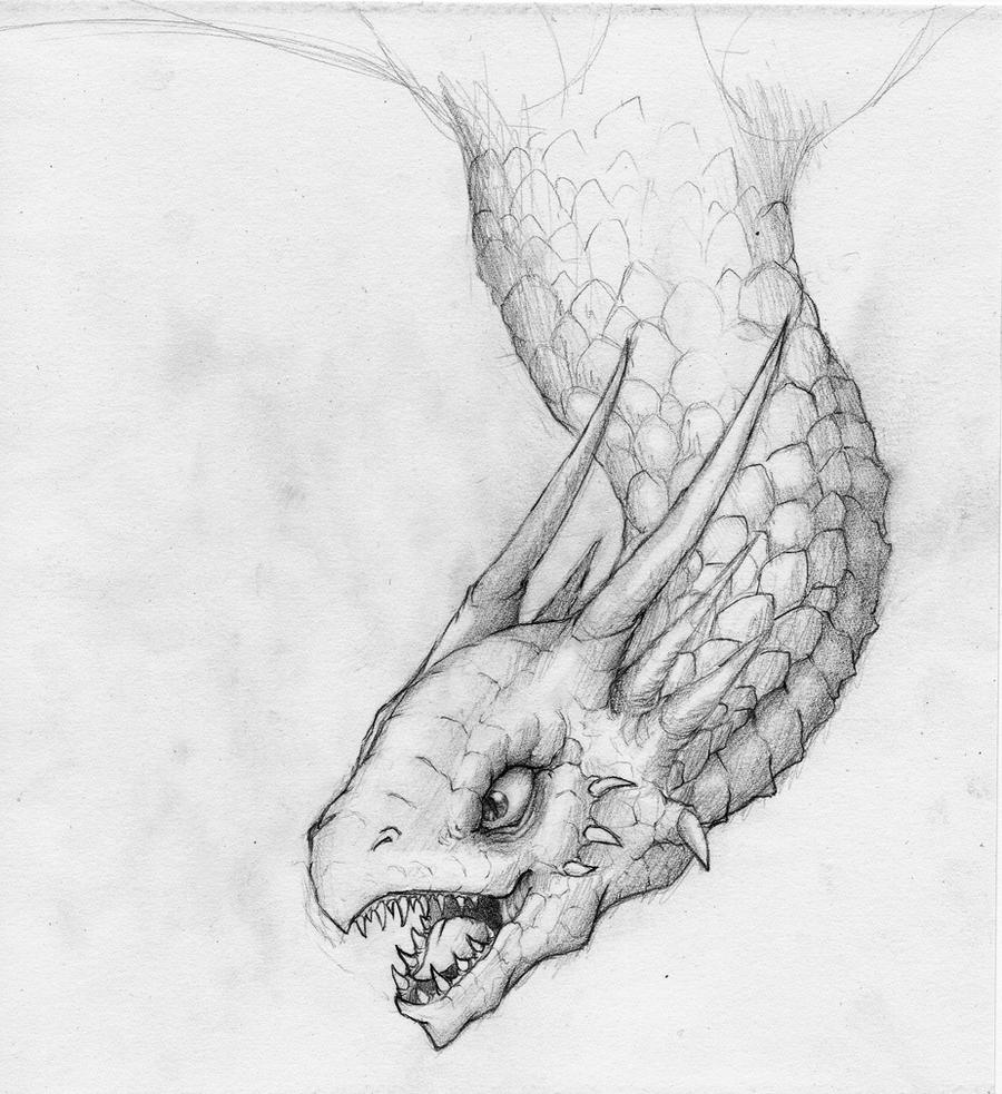 Pencil: Dragon sketch by Harley-Owen on DeviantArt