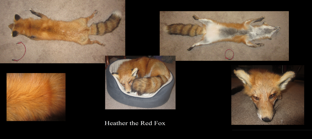 Heather the Red Fox by Mitzi-Mutt