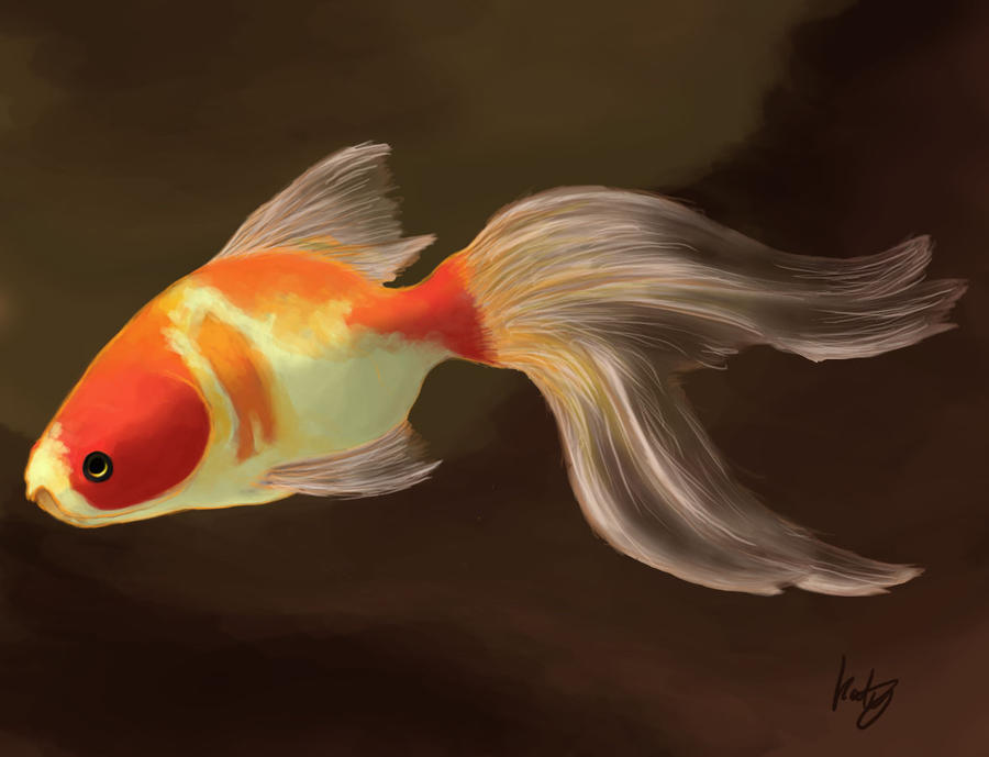 Fish by kovah on deviantart for Kumak s fish