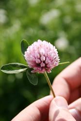 Flower. by eldarwen