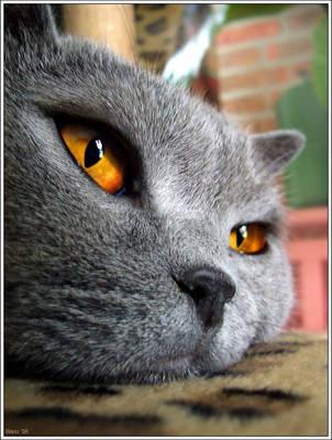 :Mr Puss.: by eldarwen