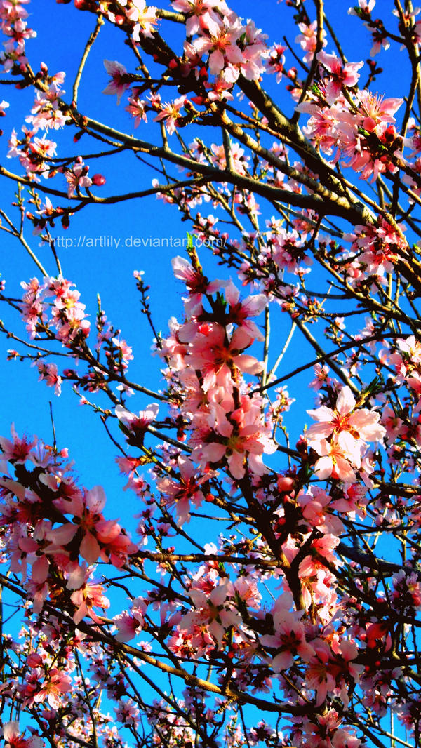 Peach Tree by ArtLily on deviantART