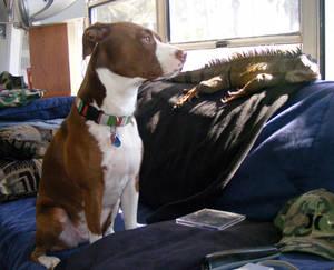 Pondering Pets