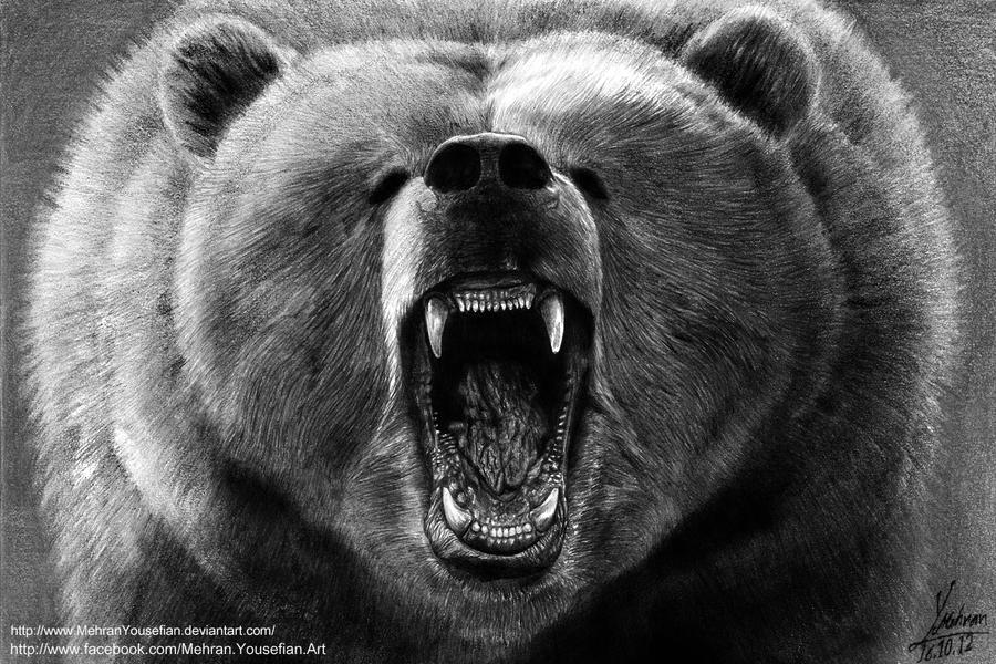 Bear Face Line Drawing : Angry grizzly bear drawing by mehran yousefian