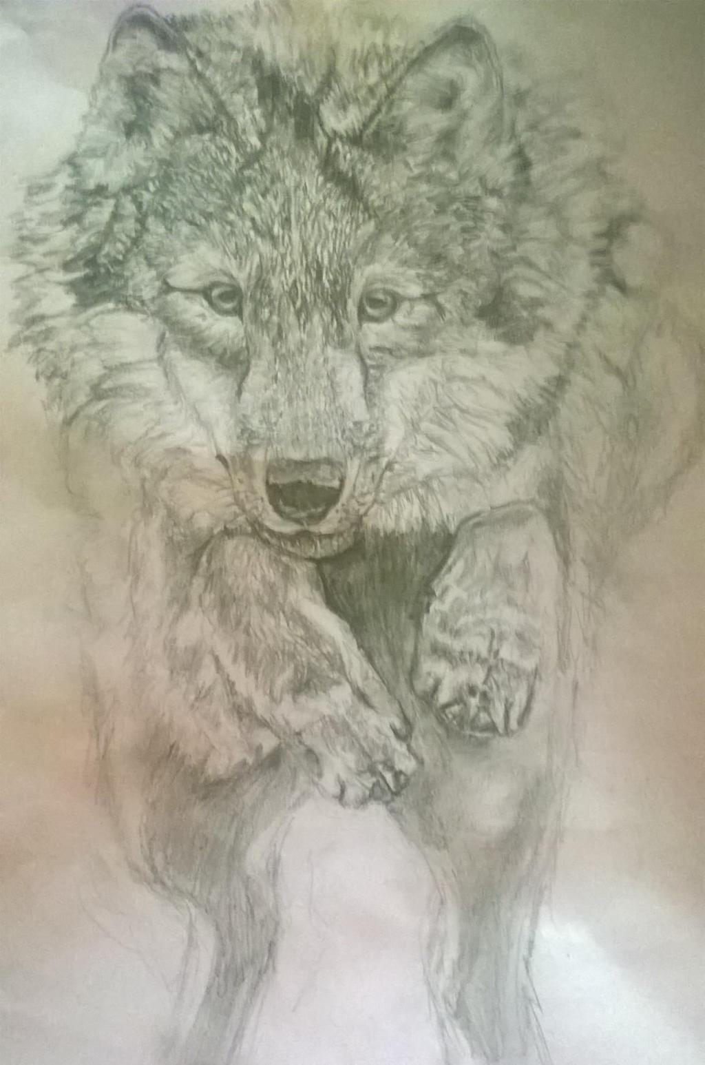 Wolf 2 by ChocoBookworm