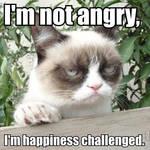 Grumpy Cat Meme 2