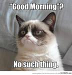 Grumpy Cat Meme 3
