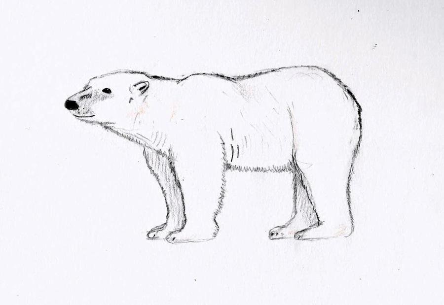 polar bear sketch by wickedlovelyfaery