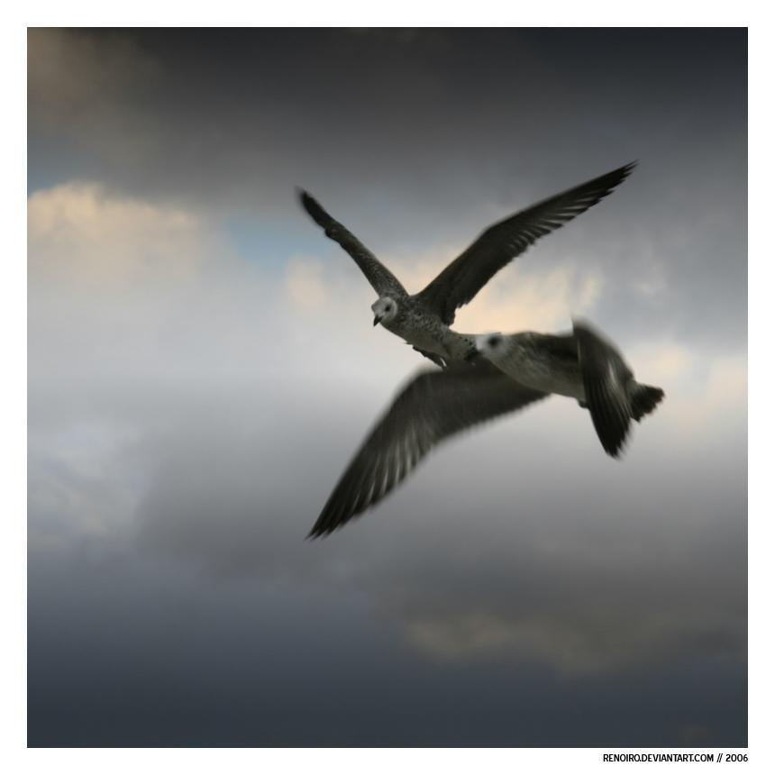 Gulls of Prey by renoiro