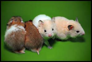 Chucha the Hamster by renoiro