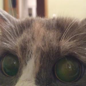 Baishev's Profile Picture