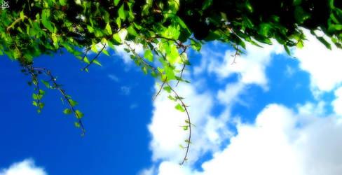 When the Sky met the Earth by froggfan09