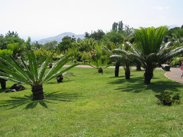Mini Palm Trees South Carolina Mrtyle Beach