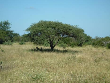 Kruger 25