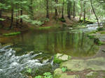 Forest River 2