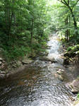 Forest River 4