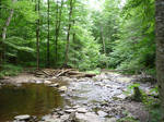 Forest River 6