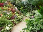 Butchart Gardens 21