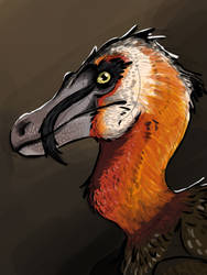 Bearded velociraptor portrait