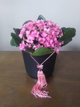 Cute Pink Flowers Houseplant